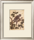 Monkey in a Tree I Prints by Dianne Krumel