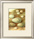 Bird Egg Collection II Art