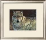 Uninterrupted Stare: Gray Wolf Prints by Joni Johnson-godsy