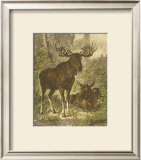 Small Moose Poster by Friedrich Specht