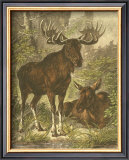Small Moose Posters by Friedrich Specht