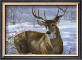 Through My Window: Whitetail Deer Prints by Joni Johnson-godsy