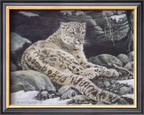 Awake Snow Leopard Prints by Alan Sakhavarz