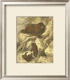Small Brown Bear Prints by Friedrich Specht