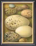 Bird Egg Collection I Prints