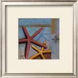 Sanibel Starfish Prints by Paul Brent