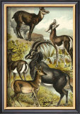 Antelope Posters by Henry J. Johnson