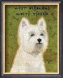 West Highland White Terrier Prints by John Golden