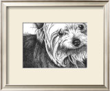 Bella the Yorkie Poster by Beth Thomas