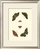 Cramer Butterfly Study II Posters by Pieter Cramer