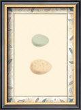 Antique Eggs II Prints