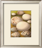 Bird Egg Collection III Prints
