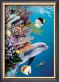 Dolphin's Reef Poster by Mark Mackay