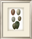Bird Egg Study VI Prints