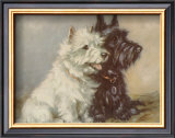 Scotch Terriers Prints by Mac