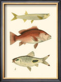 Antique Fish II Print by Ernest Briggs