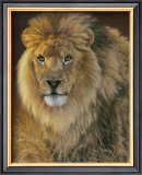 Power and Presence: African Lion Prints by Joni Johnson-godsy