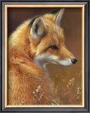 Curious: Red Fox Art by Joni Johnson-godsy