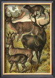 Deer Prints by Henry J. Johnson