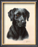 Labrador Prints by Judy Gibson