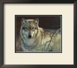 Uninterrupted Stare: Gray Wolf Poster by Joni Johnson-godsy