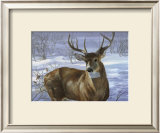Through My Window: Whitetail Deer Prints by Joni Johnson-godsy