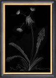 Dandelion Garden I Art by Alicia Ludwig