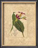 Estudio de Flores I Prints by Javier Fuentes