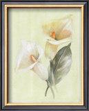 Calla Lily IV Art by Paul Hargittai