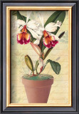 Potted Cattleya Posters by Walter Robertson