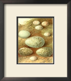 Bird Egg Collection II Print