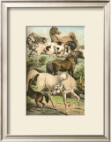 Horse Breeds II Poster by Henry J. Johnson