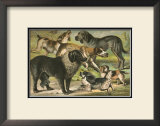 Dog Breeds III Prints by Henry J. Johnson