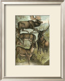 Deer and Elk Posters by Henry J. Johnson
