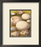 Bird Egg Collection III Poster
