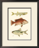 Antique Fish II Prints by Ernest Briggs