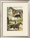 Horse Breeds I Prints by Henry J. Johnson