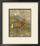 Small Red Deer Poster by Friedrich Specht