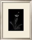 Dandelion Garden II Print by Alicia Ludwig