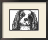 Louie the Cavalier King Charles Prints by Beth Thomas