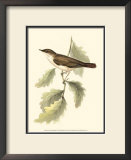 Nightingale Posters by John Gould