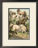 Horse Breeds II Prints by Henry J. Johnson
