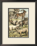 Sheep Prints by Henry J. Johnson