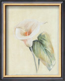 Calla Lily II Prints by Paul Hargittai