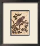Monkey in a Tree I Posters by Dianne Krumel