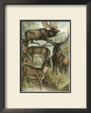 Deer and Elk Prints by Henry J. Johnson