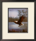 Eagle Fishing Prints by M. Caroselli