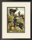 Antelope Prints by Henry J. Johnson