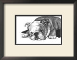 Gracie the Bulldog Prints by Beth Thomas