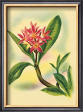 Plumeria Poster by Ted Mundorff
